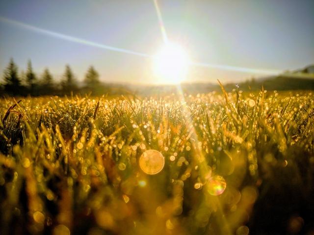 太陽のワンディセミナー